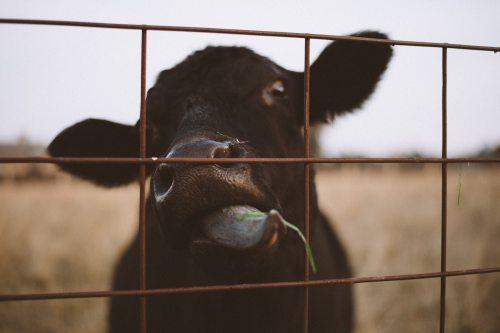 animal-animal-farming-cage-775415